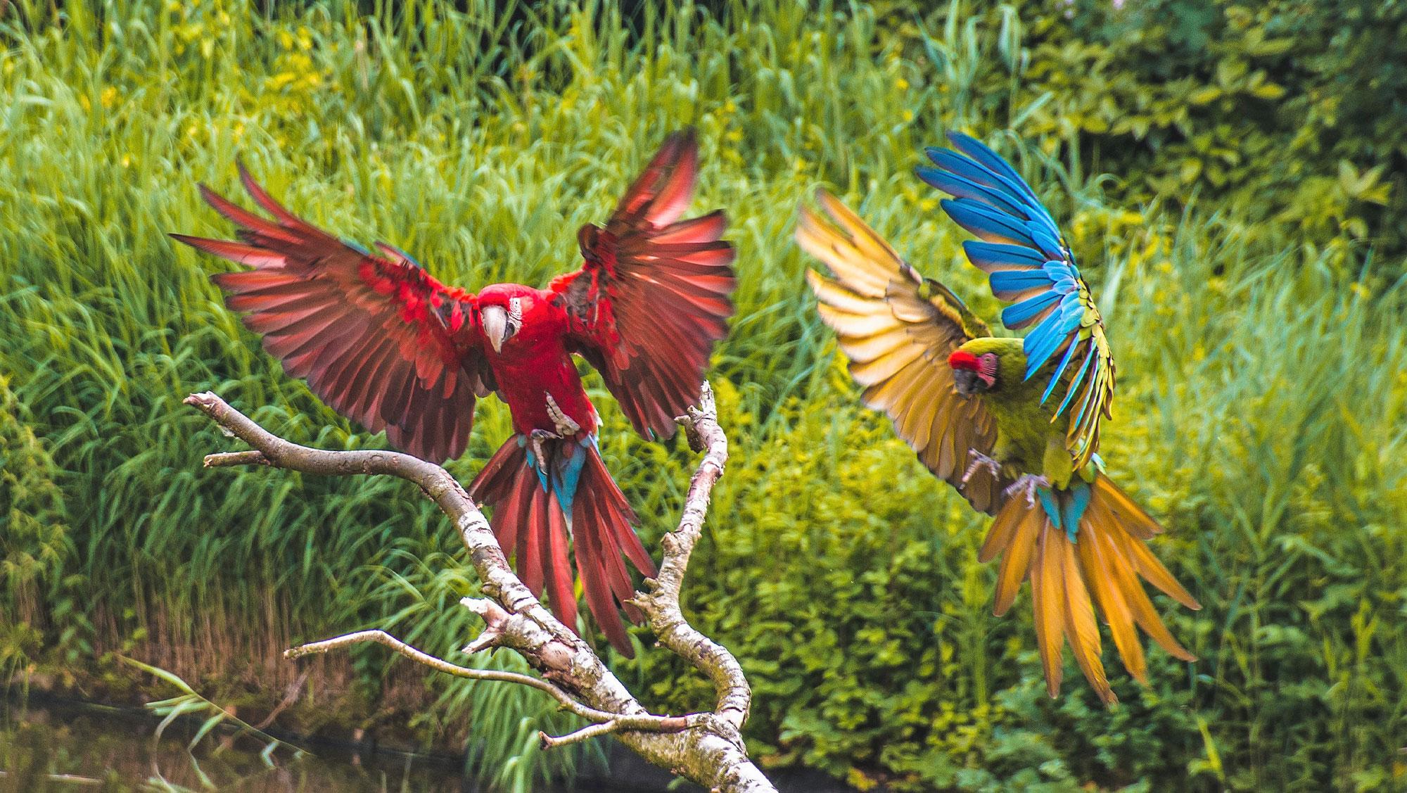VogelparkAvifauna 1