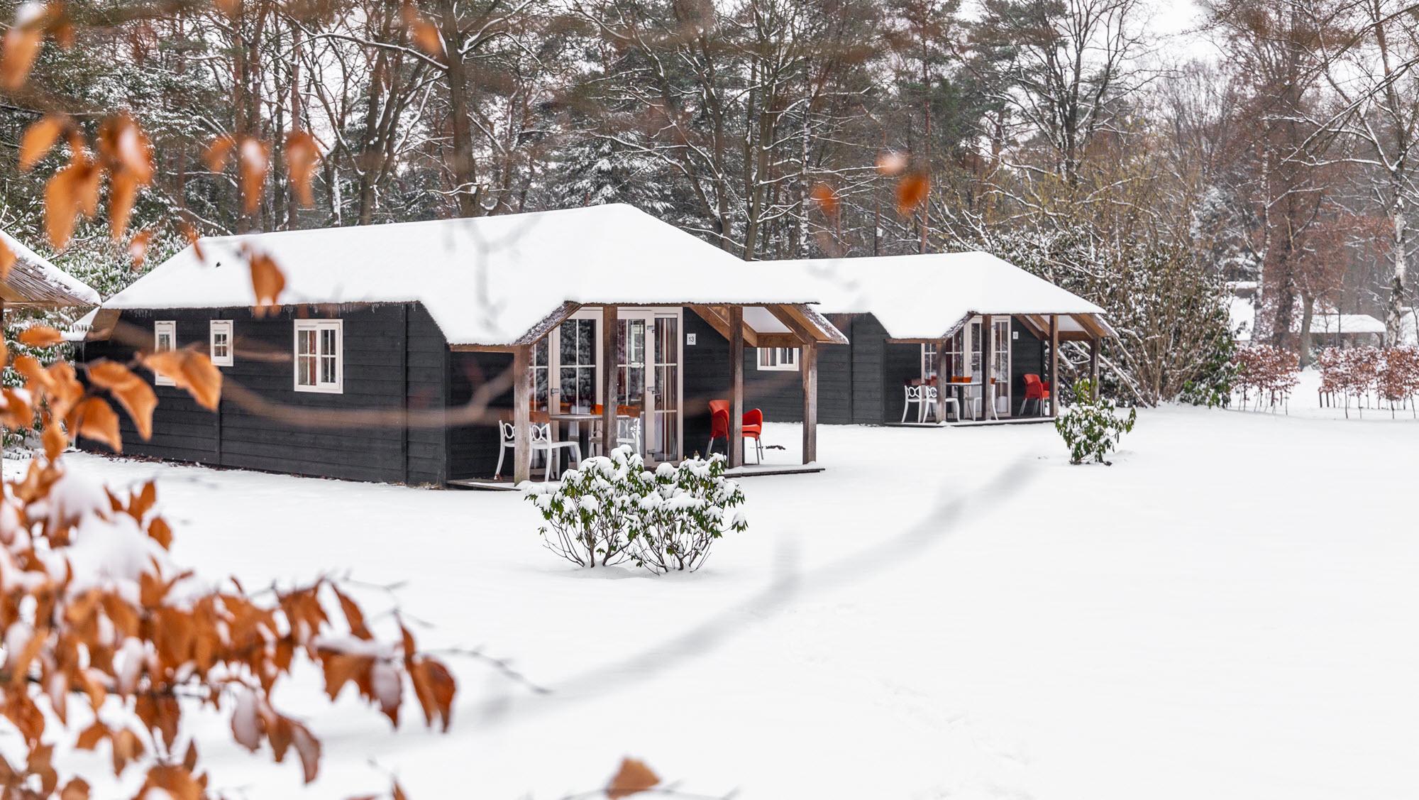 Molecaten winter in een bungalow in het bos 1