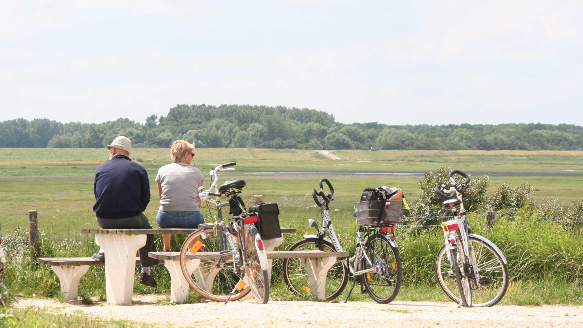 Omgeving Molecaten Park Hoogduin 23 strand met huisdier