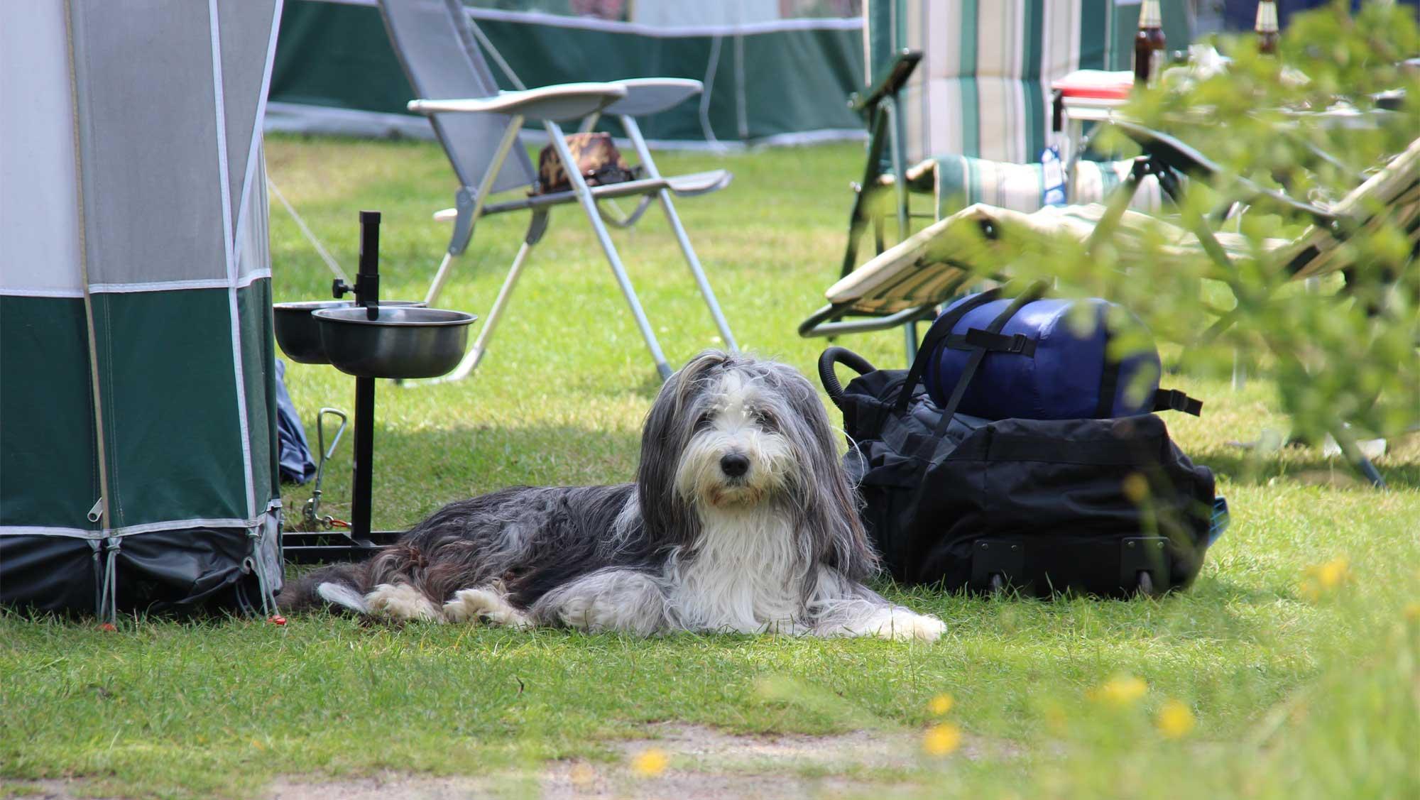 Basisplaats kamperen Molecaten Park Kuierpad 10