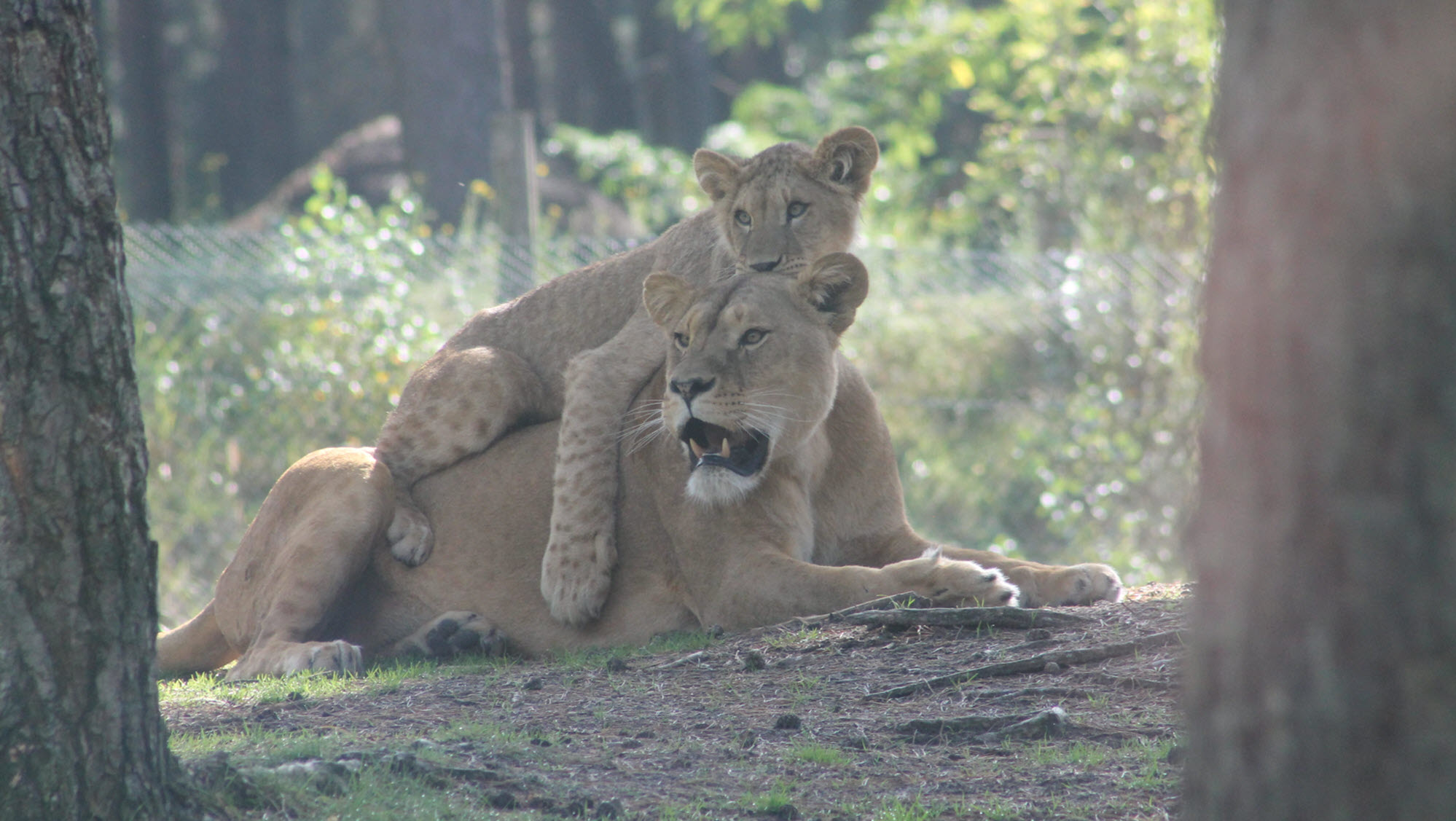 SafariparkBeekseBergen 1